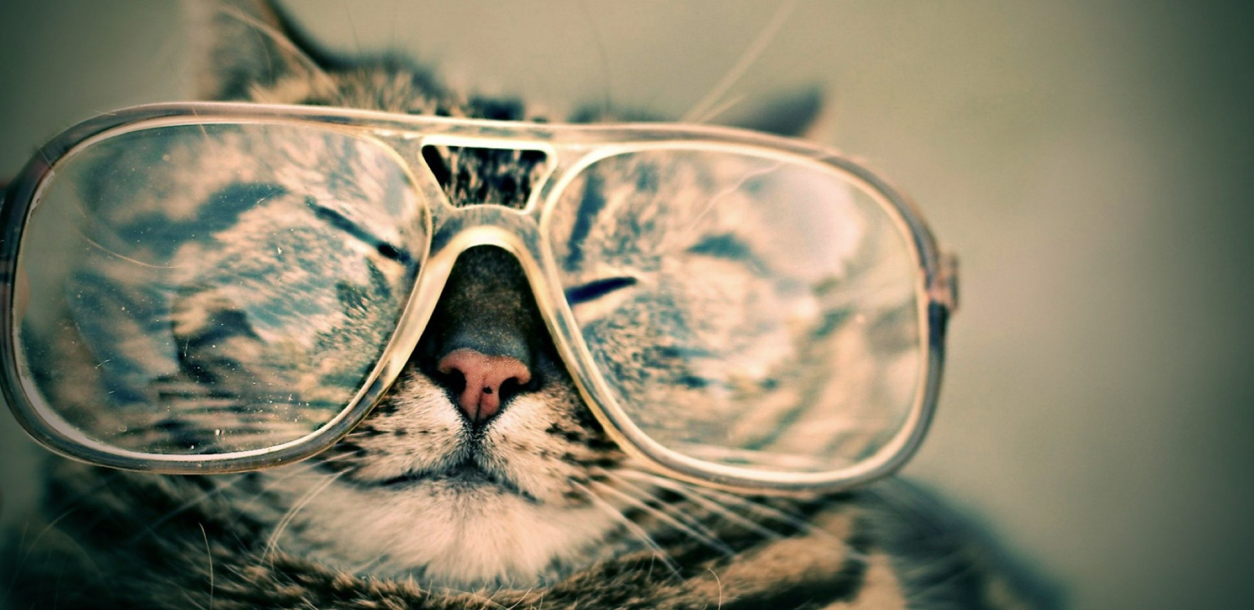 Cat wearing oversized reading glasses