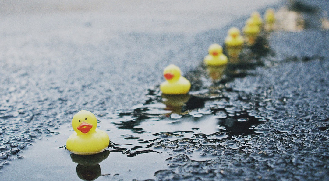 rubber duckies all in a row floating down a small stream