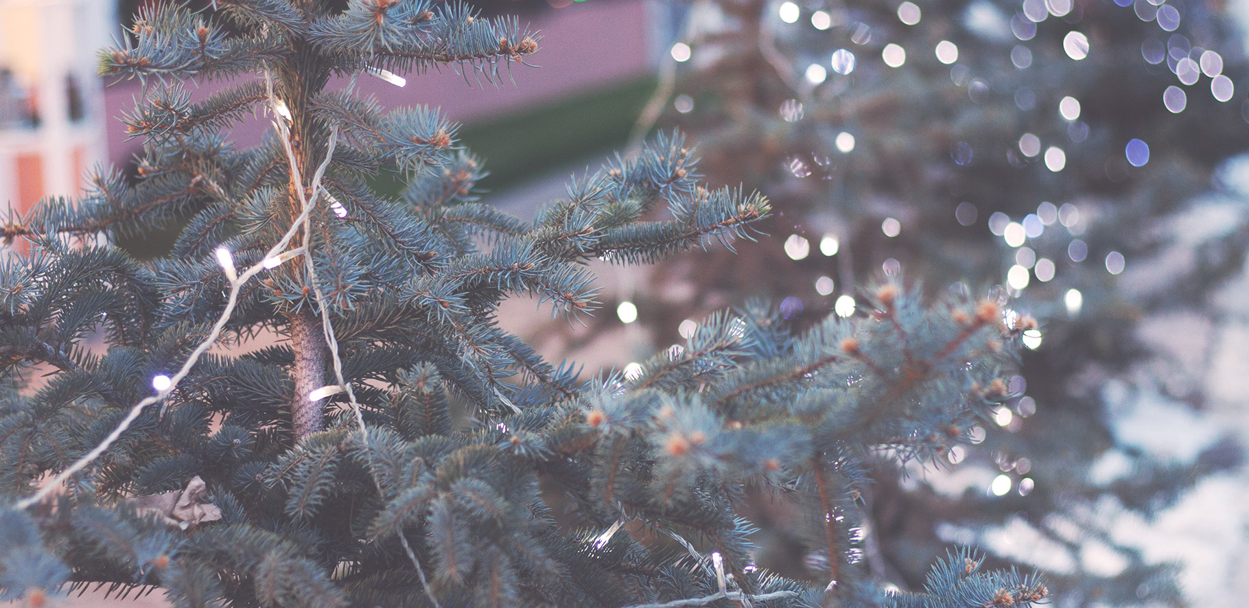 Close of up a christmas tree with white fairy lights